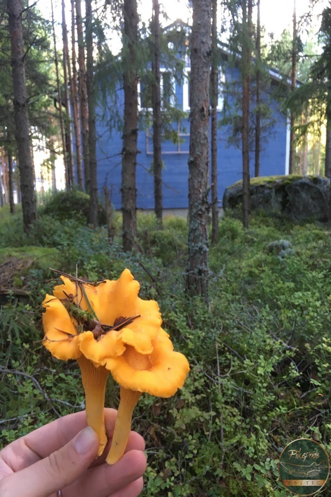picking-mushroom