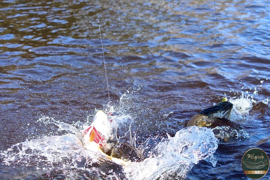 fishing in baltic sea LODGE FISHING AREAS